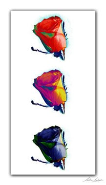 01_Color_roses