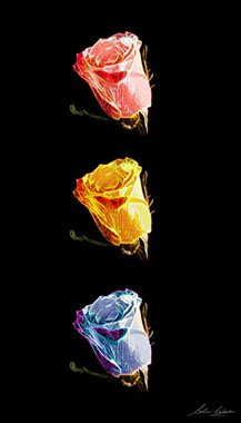 02_Glows-roses